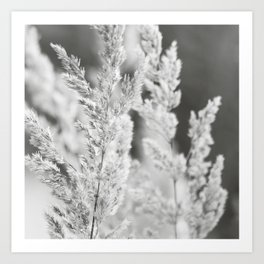 Black white reed Art Print