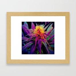 Rainbow Kush Framed Art Print