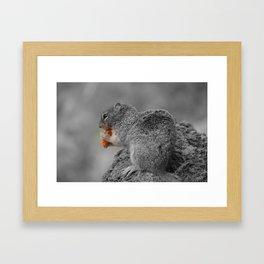 Squirrel BW Framed Art Print