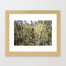 Fresh Tomatoes Framed Art Print