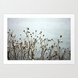 Blue Weeds Art Print
