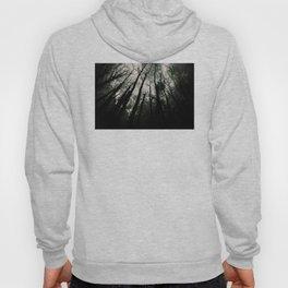 Dark Forest Hoody