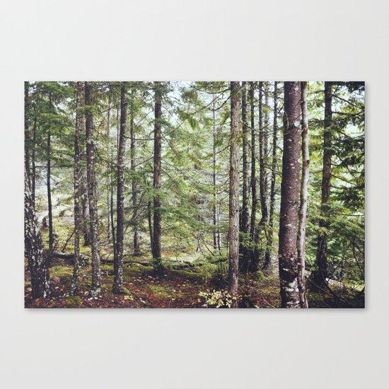 Squamish Forest Floor Canvas Print