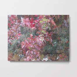 AUTUMN COLORS OF THE VINE  PLANT  Metal Print