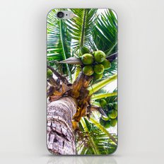 How About Those Coconuts iPhone & iPod Skin