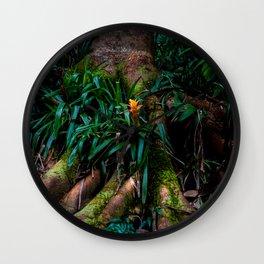 Kona Cloud Forest Sanctuary Wall Clock