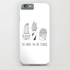 suc where you are planted Slim Case iPhone 6s