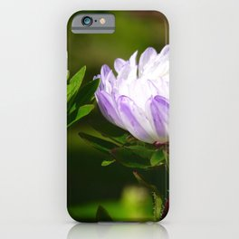 aster in the morning with water drops iPhone Case