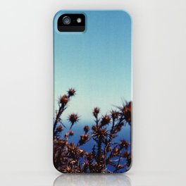 Sun-Bleached Blossom iPhone Case