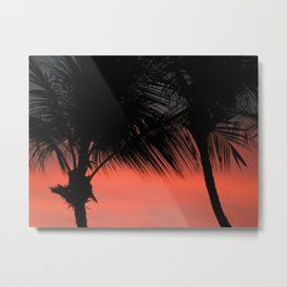 Palm tree, Salvador, Bahia  Brazil Metal Print