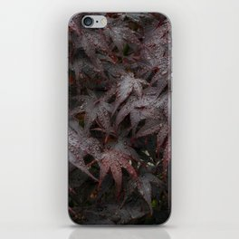 Water droplets on Acer leaves iPhone Skin