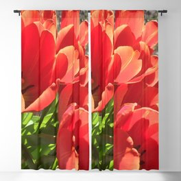 Orange Red Tulips Blackout Curtain
