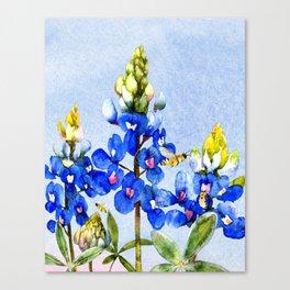 Bluebonnets 3 Canvas Print
