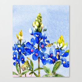 Bluebonnets 3 Canvas Print