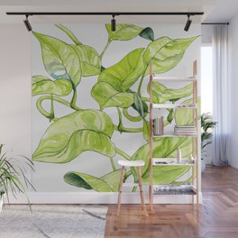 Devils Ivy Illustration Wall Mural