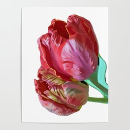 Two Red Tulips Vector Isolated Poster