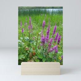 Purple loosestrife Mini Art Print