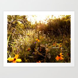 From a hike Art Print