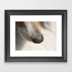 dog nose  Framed Art Print
