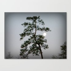 Morning Moon Shine Canvas Print