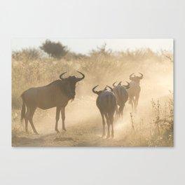 Pack of Wildebeest Canvas Print