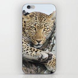 Wild leopard iPhone Skin