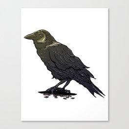 Crow Contemplation Canvas Print