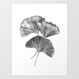 Autumn Ginko I Art Print