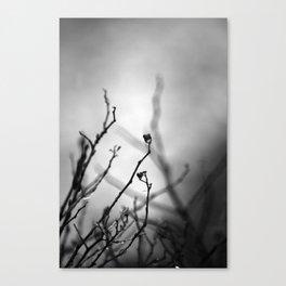 Augury in Grey Canvas Print