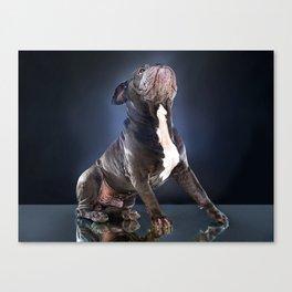 Super Pets Series 1 - Super Liam Canvas Print
