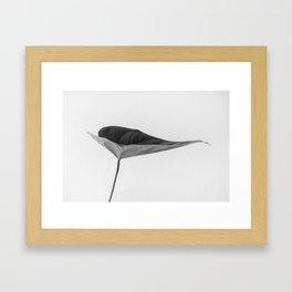 The Leaf (Black and White) Framed Art Print