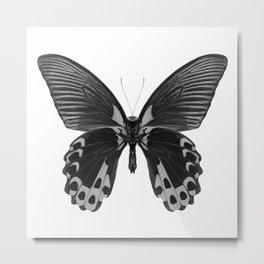 Mono Mormon Butterfly Metal Print