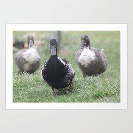 Duck Mafia Art Print
