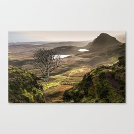 Washed with sunlight. Canvas Print