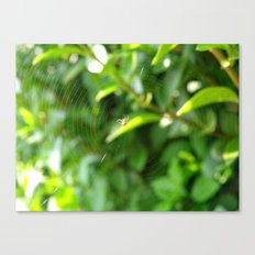 Snacking Spider Canvas Print
