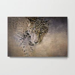 Stalking Her Prey - Wildlife - Leopard Metal Print