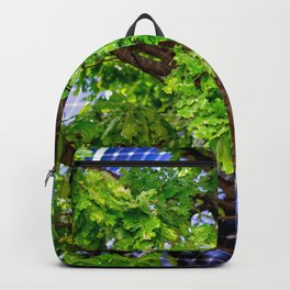 Four Seasons Photosynthesis - Summer. Green Oak Tree And A Solar Power Panel Backpack