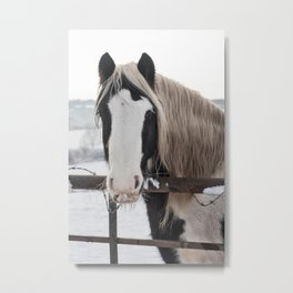 Horse by the fence Metal Print