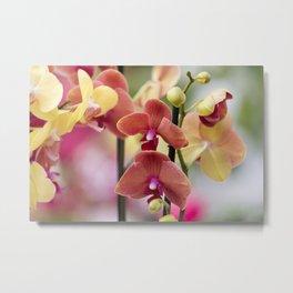 orchid in bloom Metal Print