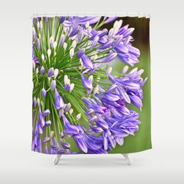 Agapanthus (African Lily) Shower Curtain