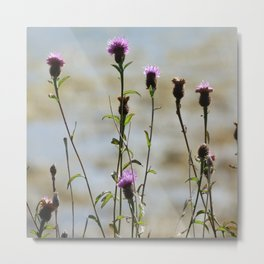 Highland Thistle Metal Print