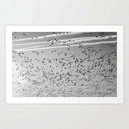 The Birds (Black and White) Art Print