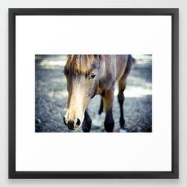 Horse Love. Framed Art Print