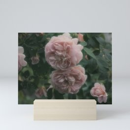 Rose Garden XII Mini Art Print