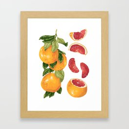 Blooming pomelo with fruits Framed Art Print