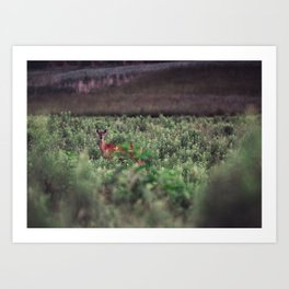 Field Deer Art Print