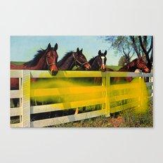 Untitled (Horses) Canvas Print