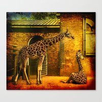 giraffes Canvas Prints featuring Giraffes by LudaNayvelt