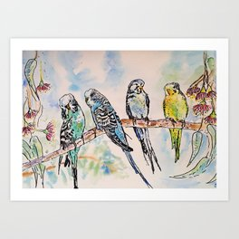 Colourful Budgies Budgerigars Sitting on A Branch Art Print