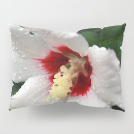 A Gift from the Universe Pillow Sham